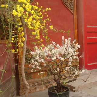 Thursday's Child: Imperial Garden, Forbidden City, Beijing