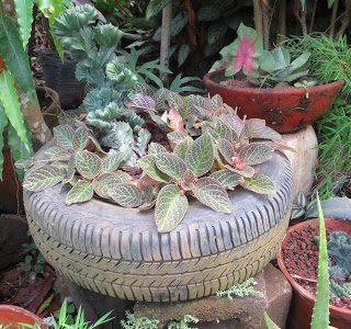 Thursday's Child: Vivero Ecologico La Gallina, Nicaragua