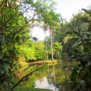 Thursday's Child: Los Tarrales Reserve, Guatemala