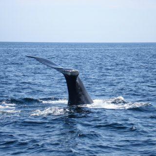 Thursday's Child: Whale Watching, Twillingate, Newfoundland